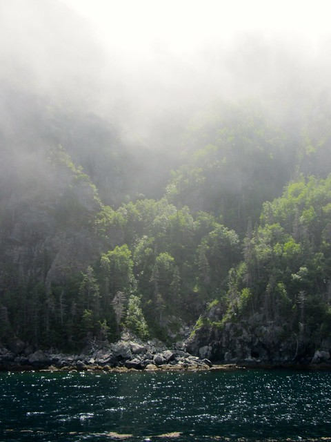 Misty Trees and Shoreline on Bonne Bay
