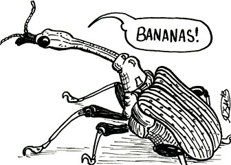 ds13.1---weevilbananas