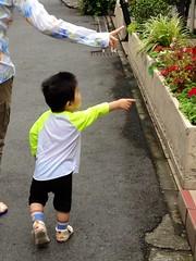 朝散歩 とらちゃん 指差し (2012/7/22)
