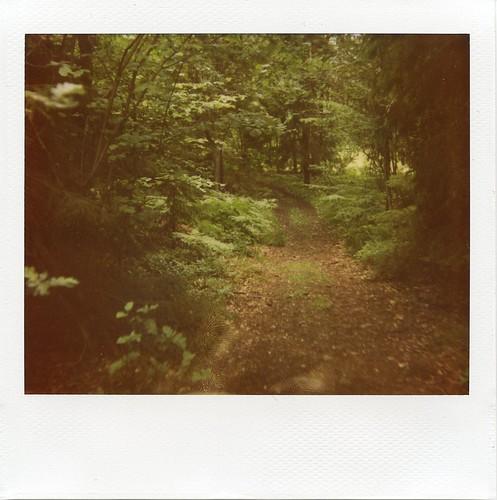 svartsö forest