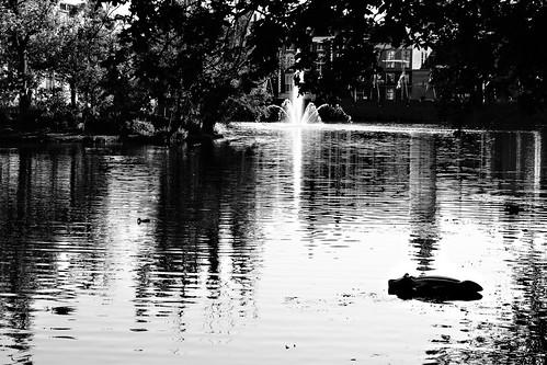 Haagse Croc op de hofvijver! by Pascal Maramis
