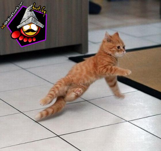 gambar kucing 06
