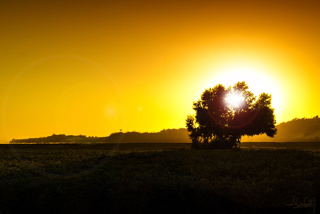 Sunflare   { Explore Aug 03/2012 }