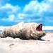 Baby seal by Ans van de Sluis
