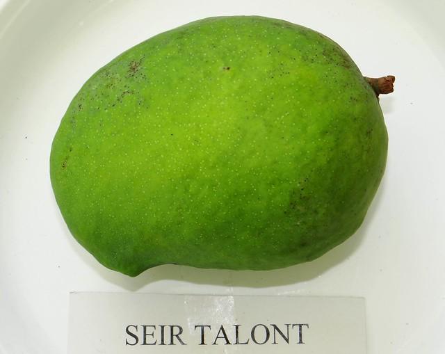 Mango  #343: SEIR TALONT
