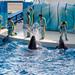 150216 Enoshima Aquarium-24.jpg