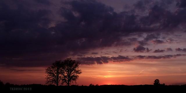 Two Trees Under Purple Skies