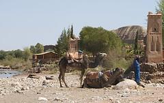 Morocco - 171