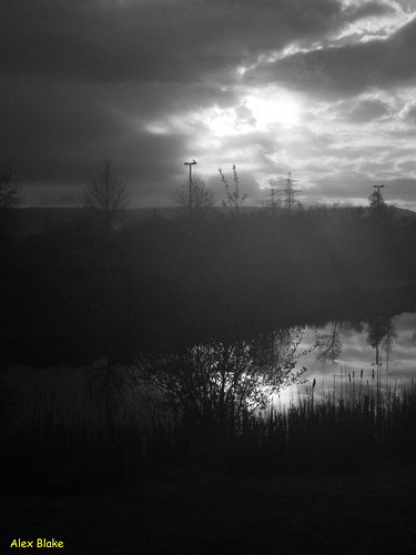 lake tree wales sunrise dawn mono pond llansamlet