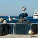 Sea Gulls | Cabo San Lucas | The Design Foundry