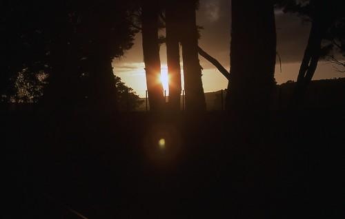 sunset newzealand holiday tree outdoor wairarapa morisonsbush