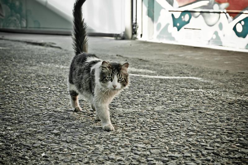Street Cat Don't Take No Flack