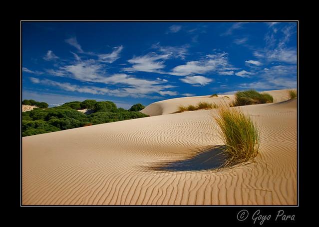 El avance de las dunas