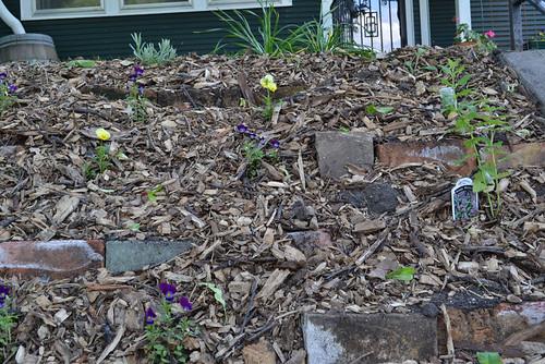 new front yard garden