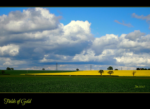 Fields of Gold by Jan 130