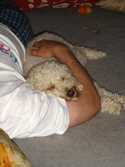 hobbes - asleep