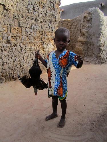 Un joven trae un pollo como regalo para el festejo.