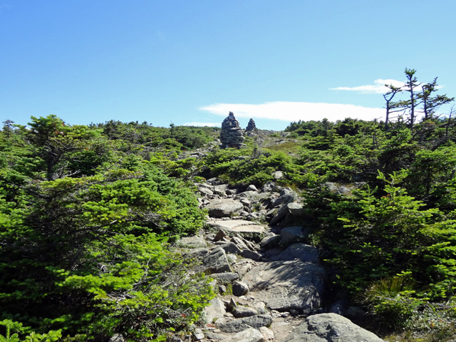 Near Mt. Moosilauke Summit