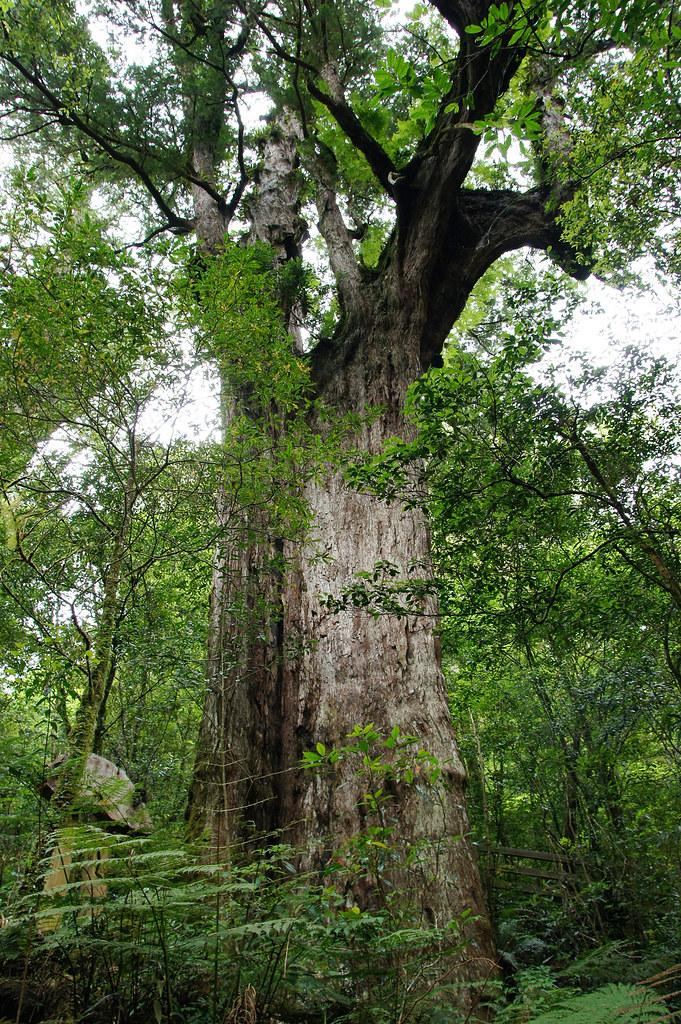 巨木群,與往拉拉山的路上-079