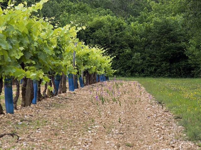 Dans les vignes et autres endroits inattendus 7389673950_deaa0ae4ea_z