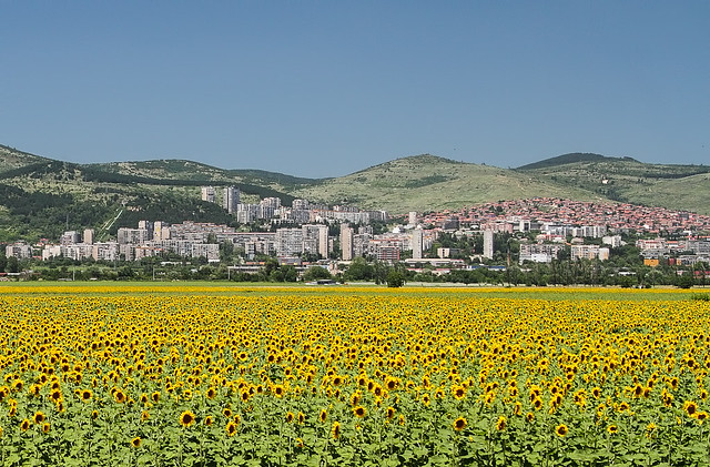 Sunflowers and Sliven