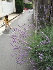 朝散歩 (2012/6/29)