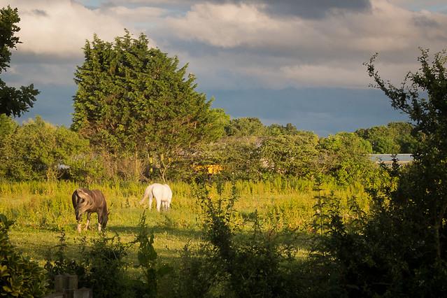 moody horses
