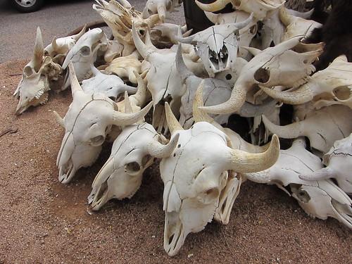 skulls, antlers, sedona IMG_8115