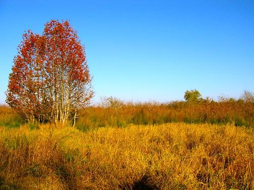 autumn fall florida parks foliage