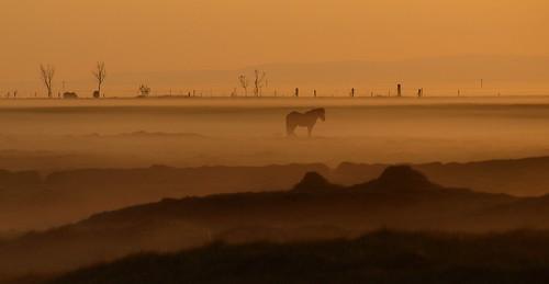 sunset horse field fog landscape iceland peach silhouettes 2012 hestur suðurland groundfog hvolsvöllur dalalæða platinumheartaward