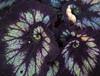 Botanic Gardnes-095