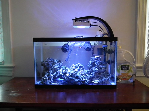 Jj 39 s reef for Saltwater fish for 10 gallon tank