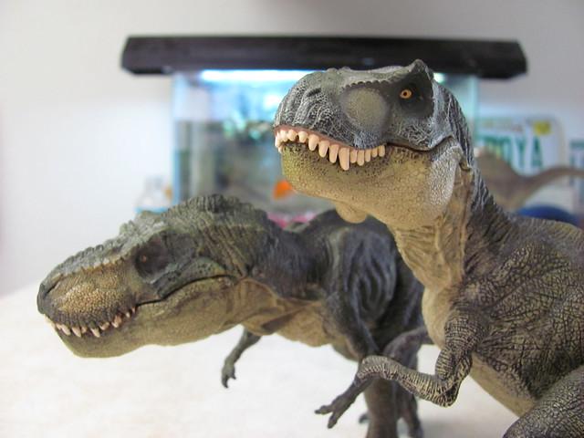 Two rexes comparison 02