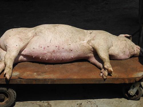 Dead Pig - Hsinchu