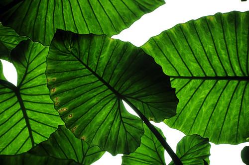 [フリー画像素材] 花・植物, 葉っぱ, 緑色・グリーン ID:201205090600