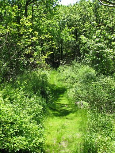 Grass Path 2