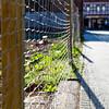 fence_