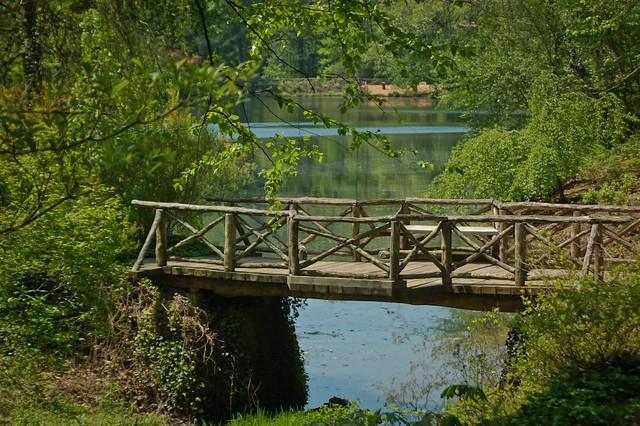 Bass Pond 4