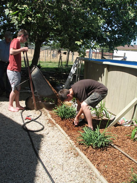 adding bark to the flower beds