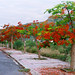 Road of Flamboyant