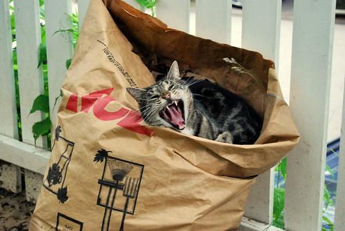 WPIR - Big yawn