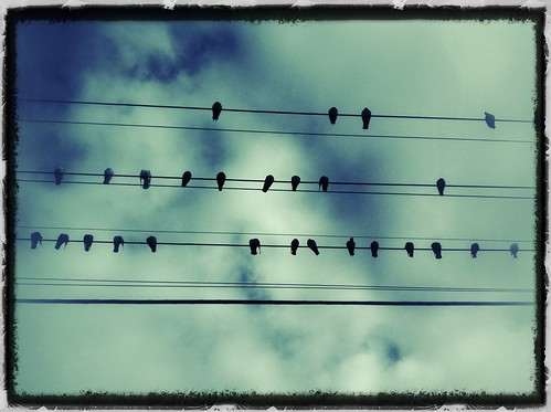 Birds on a wire. Day 161/366.