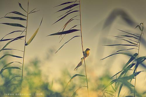 bird me nature yellow female sadness alone sad wind wildlife weaver left mode baya