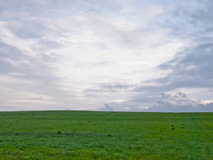 Landscape Project 1-6.jpg