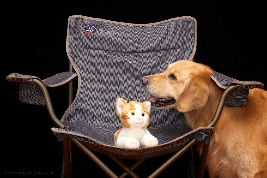 A Dog, a Cat, and a Chair