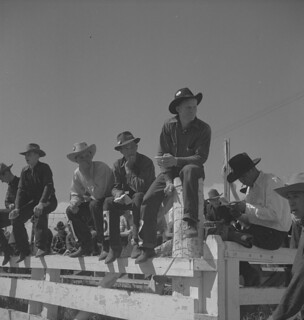 Calgary Stampede, Alberta. A group of cowboys sitting on a fence, watching the competitions / Stampede de Calgary, Alberta. Un groupe de cow-boys est assis sur une clôture pour observer la compétition