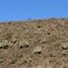 Cerro con cactus - Hillside with Cactus; Región Mixteca, Oaxaca, Mexico por Lon&Queta