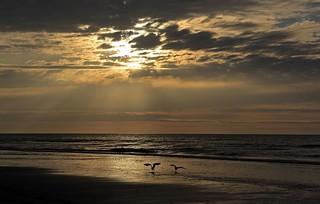 meeuwen strand Ameland
