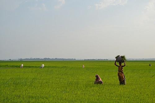 Mayadip Island Women