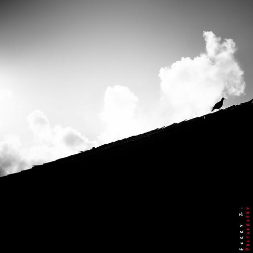 rodneybay blackwhitephotos